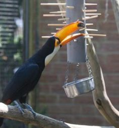 Put food in the tube so they have to pull out the sticks to get the food to fall out- would be great for primates too