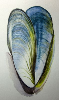 Mussel shell original watercolour pencil drawing by AnneLawsonArt Shell Drawing, Shell Painting, Watercolor Pencils, Watercolor Paintings, Pencil Drawings, Art Drawings, Sea Life Art, Ocean Life, Natural Form Art