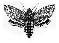 moths - Google zoeken