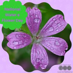It's National Water a Flower Day. Plant dreams, pull weeds, and grow a happy life!