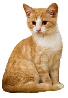 Why my Cat Sneezing Cute Kittens, Baby Kittens, Cats And Kittens, Kitty Cats, Animals And Pets, Funny Animals, Cute Animals, Public Domain, Cat Sneezing