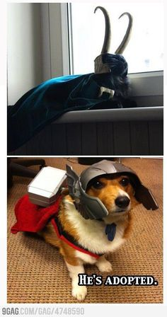 I can't even handle a Loki cat right now! Then you throw in a Thor dog! Made my day!