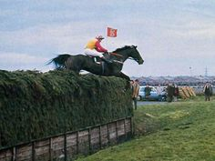 Sport Of Kings, Racehorse, Grand National, Horse Photos, Horse Racing, Cross Country, Great Photos, New Zealand, Horses