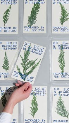 Leaves, each unique, packaged in plastic with designed card, text reading: LOT SLC, UT N 40.746445 W 111.874916, PACKAGED BY 7DB DEC. 2017.  #contemporaryart #contemporarydesign #typeface #typefaceideas #typspo #graphicdesign #artwithplants #shrinkwrappedplants