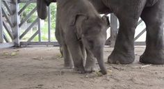 17 Baby Elephants Learning How To Use Their Trunks