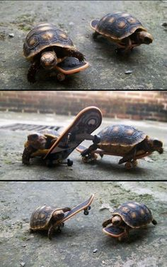 Turtles are awesome! :)
