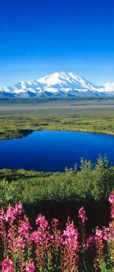 #Nature - Denali National Park & Preserve, #Alaska