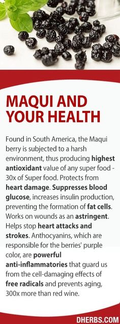 Maqui top superfood heart health astringent prevents formation of fat cells