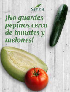 El gas etileno que liberan los #tomates y #melones acelera la descomposición de los #pepinos.