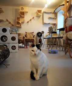 An afternoon at the cat café Kopjes in Amsterdam, Netherlands. Click through for more info and cat pictures: http://www.traveling-cats.com/2015/11/cats-from-amsterdam-netherlands.html