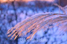 Palette hivernale/ winter snow at sun down