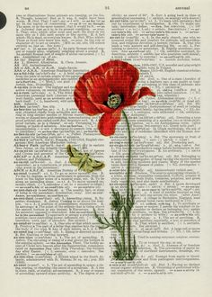 Poppy II Dictionary Print page - Painting Style Newspaper Painting, Newspaper Art, Book Page Art, Book Art, Collage Art, Collages, Poppies Tattoo, Turkish Art, Paper Drawing