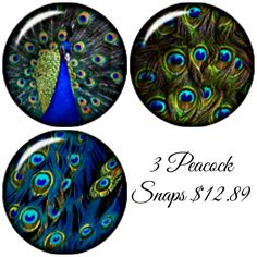 3 high domed Peacock Snap Charms will fit Noosa Chunk style Jewelry and Ginger Snaps bracelet - pinned by pin4etsy.com