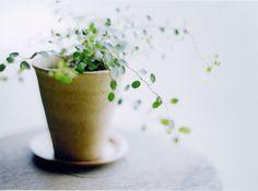 Plantscape ♥