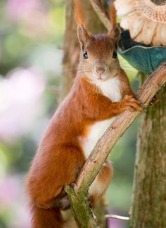 I want to work positively, but I'm not aggressive. If anything, I want to work friendly. Does my answer make sense? Does this hope link 'smile'? Hamsters, Cute Squirrel, Baby Squirrel, Squirrels, Animals And Pets, Baby Animals, Cute Animals, Squirrel Pictures, Animal Pictures
