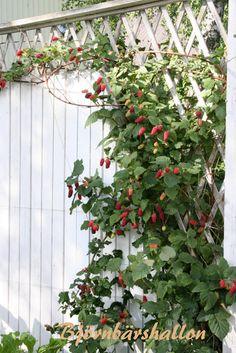 Outdoor Structures, Plants, Summer, Garden, Dreams, Summer Time, Summer Recipes, Flora, Plant