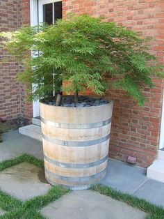 Acer palmatum var. dis. 'Virdis' in Acacia tub (Design/ Build) | Flickr - Photo Sharing!