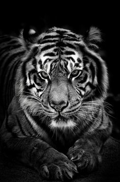 The Elusive by Ani Pandit on 500px