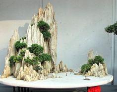 photo bonsai-8.jpg