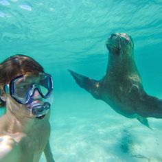 This Man Mastered The Art Of Animal Selfies