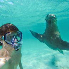 Un expert dans lart des selfies avec des animaux  2Tout2Rien
