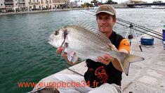 Pêche des grosses dorades de Sète par Europêche34 Fishing Techniques, Sea Fishing, Fishing Equipment, Traditional, Sports, Collections, Beautiful, Hs Sports, Sport