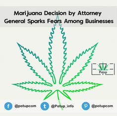 Marijuana Decision by Attorney General Sparks Fears Among Businesses