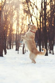 Playing in the snow by: Marina Plevako