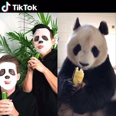 Eating food like a cute panda! is a global video community, which makes i… – TIK TOK Independence Day Gif, Panda Lindo, Funny Animal Videos, Funny Videos, Funny Memes, Jokes, Cute Panda, Panda Bear, Tik Tok