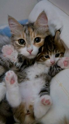 Kittys galore...adorable♥♥