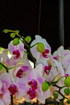 Flowers - Leonidas Bratini