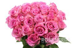 RoseNerds.com Wholesale Pink Roses #roses #weddingflowers #diywedding
