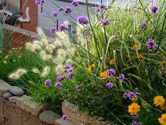 verbena bonariensis , pennisetum villosum and coreopsis
