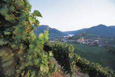 Das #Weinviertel in #Niederösterreich; familienfreundliches Radwegenetz zwischen malerischen Weingärten: www.hikeandbike.de