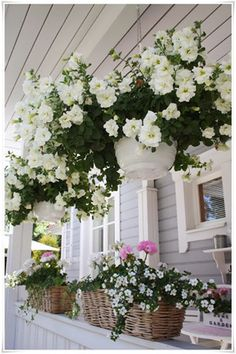 tended hanging baskets full of petunias. This extends the garden up onto the porch and compliments the house.Well tended hanging baskets full of petunias. This extends the garden up onto the porch and compliments the house. Outdoor Pots, Outdoor Gardens, Hanging Plants Outdoor, Diy Hanging, Outdoor Living, Garden Cottage, Garden Pots, Potted Garden, Garden Sheds