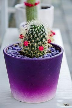love this tiny cactus with flowers in bloom Cacti And Succulents, Planting Succulents, Cactus Plants, Planting Flowers, Tiny Cactus, Indoor Cactus, Cactus Art, Painted Plant Pots, Painted Flower Pots