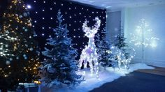 LED White Birch Tree - 8ft (Cool White Lights) | Trees, Plants & Foliage Theme | Event Prop Hire