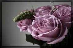 Sterling roses... my fav.