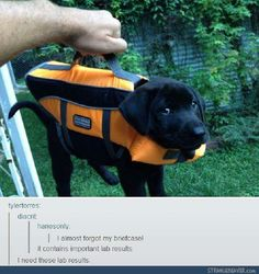 Funny tumblr post<--the look that dog is giving is hilarious