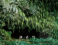 Fern Grotto Kauai - beautiful boat cruise, Hawaiian music, and then a hike to the Fern Grotto.  Awesome!!