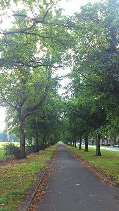 Cringle Park, Manchester Manchester Uk, United Kingdom, Sidewalk, Country Roads, The Unit, Park, Side Walkway, England, Walkway