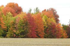 Country Roads, Birds, Landscape, Scenery, Bird, Landscape Paintings, Corner Landscaping, Birdwatching