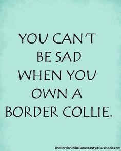 You just can't. #thebordercolliecommunityfacebook