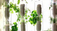 Britta Riley şi-a dezvoltat în propriul apartament din New York o mică fermă. Ea creşte diverse legume cu ajutorul acvaponiei. Aceasta şi-a prezentat proiectul în cadrul unei conferinţe TED, potriv...
