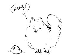 Pomeranian Sketch