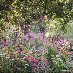oin our Dutch & German garden tour in August to explore Piet Oudolf's work + Garten Moorriem with their tour de force Echinacea borders. I - All For Garden Prairie Garden, Meadow Garden, Dream Garden, Amazing Gardens, Beautiful Gardens, Garden Borders, Plant Design, Back Gardens, Kew Gardens