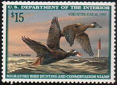 Federal Duck Stamp RW63 1996-97 Surf Scoter - TR Duck Stamps, Etc.