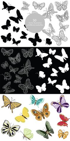 Butterfly Drawing, Butterfly Design, Line Drawing, Black Backgrounds, I Shop, Drawings, Illustration, Color, Bowtie Pattern