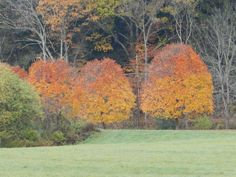 Blog post on sourcing free images on web. Two-Toned Maples photo: Deborah Lee Luskin