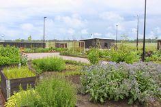 kumla sjöpark växthus - Sök på Google